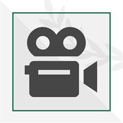 Видео-консультация с дендрологом