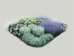 Розарий № 2 Сиреневый туман