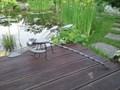 Стрекоза малая - фото 5162