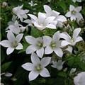 """Колокольчик """"White Pouffe"""" - фото 5657"""