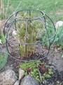 """Опора """"Глобус"""" для пионов и кустарников - фото 6445"""